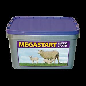 Megastart-Ewe-Lamb