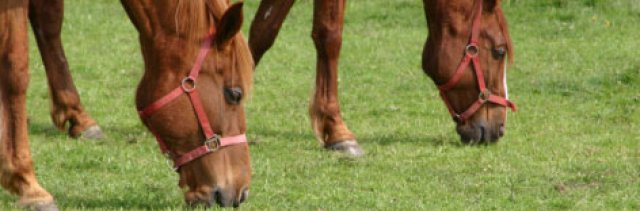 paardeweiden_01