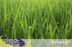 triferto-n23-gras